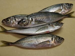 魚も食べてますか?