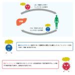 コレステロールは下げる必要はなし!!日本もやっと・・・・??